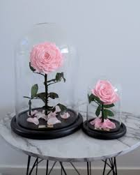 pink enchanted rose