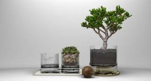 indoor plants that don t need sunlight plants tag stories henspark