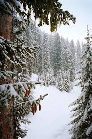 5242 best winter wonderland images on pinterest winter snow