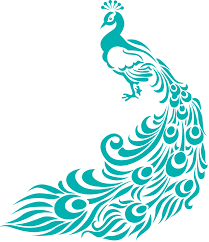 simple colorful peacock drawing free download clip art free