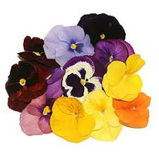 edible flowers for sale edible flowers our farm by earth flora inc