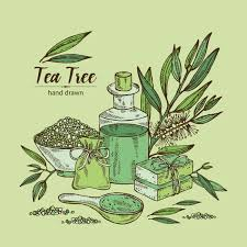 tea tree and scabies it is a complete solution best