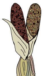 ornamental corn illustration free stock photo domain pictures