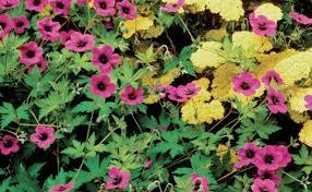 beautiful plants beautiful low maintenance plants finegardening