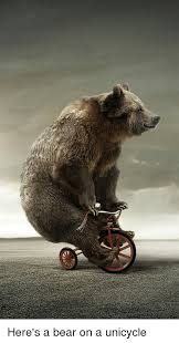 Unicycle Meme - here s a bear on a unicycle bear meme on me me