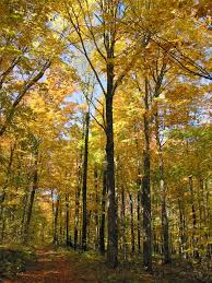 Wisconsin Forest images The new old forest grow jpg