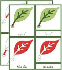 montessori tree printable the helpful garden montessori botany primary parts of cards