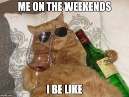 Funny Cat Birthday Meme - funny cat birthday memes imgflip