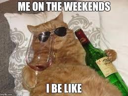 Birthday Meme Cat - funny cat birthday memes imgflip