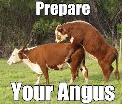 Funny Cow Memes - don t have a cow man actually that s exactly what you re supposed