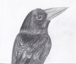quick raven sketch by painted shadow on deviantart