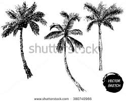 palm tree vector free vector at vecteezy