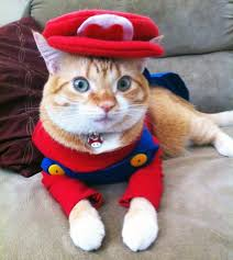 Toad Halloween Costume 100 Genius Pet Costumes Halloween Brit