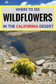 California travellers check images 331 best southern california with kids images usa jpg