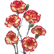 tattoo flower drawings stunning red mini carnation flowers fresh drawings of carnations