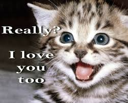 Smiling Cat Meme - cat meme quote funny humor grumpy kitten mood love wallpaper
