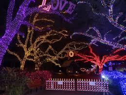 Christmas Lights At Houston Zoo by Start A Holiday Tradition At Zoo Lights