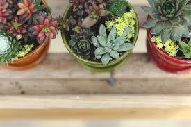 succulents meaning air plants succulents cacti hoen u0027s garden center u0026 landscaping