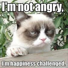 Grouchy Cat Meme - grumpy cat i m not angry i m happiness challenged memes grumpy