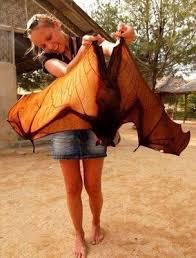 bats for sale joseph durso dursojdurso2