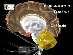What Are The Parts Of A Book Report Human Brain And Its Parts Biology Youtube