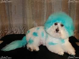 Dog Grooming Styles Haircuts Dog Grooming God U0027s Creatures