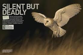 What Does A Barn Owl Look Like Barn Owl A Deadly Hunter Discover Wildlife