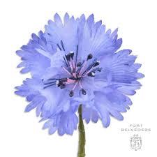 blue flower cornflower boutonniere buttonhole flower in blue silk by fort
