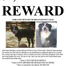 australian shepherd rescue san diego and friends lost and found u2013 aussie rescue socal