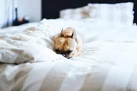 gemütliche schlafzimmer 5 tipps für ein gemütliches schlafzimmer