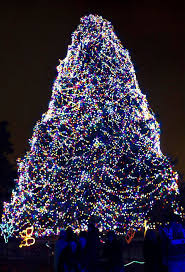 when does the lights at the toledo zoo start 98 best toledo zoo images on pinterest the zoo toledo ohio and zoos