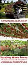 need to do this gardening growing our own pinterest