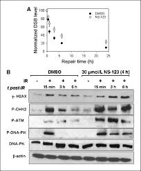 identification and biological evaluation of a novel and potent
