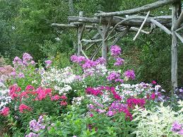 phlox flower all about phlox perennial pleasures nursery