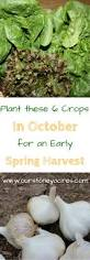 best 25 fall planting guide ideas on pinterest fall planting