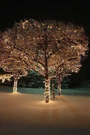 outdoor lights tree branches lights card and