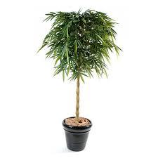 plante bureau bambou bouddha semi naturel elementvegetal com grossiste en