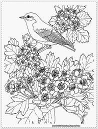 10 images of tropical bird coloring pages realistic printable