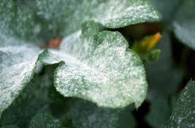 Common Plant Diseases - bye bye fungi u2013 junior master gardener