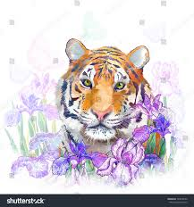 tiger flowers iris stock illustration 144018250