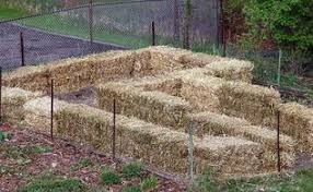 straw bale gardening hometalk