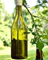 diy wine and beer bottle hanging plant holder decor advisor