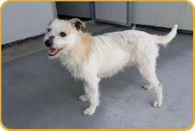 cani in cerca di casa tutti i cani in cerca di casa adica associazione per la difesa