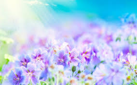 blue and purple flowers blue and purple background free cool wallpapers for