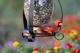 Backyard Wild Birds Benefits Of Attracting Birds To Your Backyard