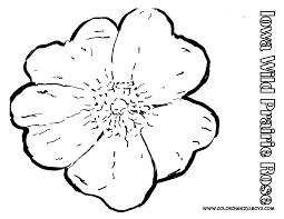 hairstyles2 wild prairie rose state flower of iowa