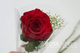 Baby S Breath Wholesale Wholesale Single Stem Red Rose Bouquets With Baby U0027s Breath Rose