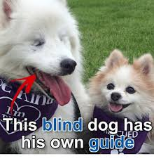 Hyper Dog Meme - 25 best memes about blind dog blind dog memes