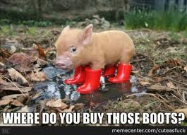 Funny Pig Memes - very funny pigs meme images wishmeme