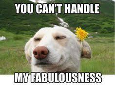I Am Fabulous Meme - i m fabulous meme cerca con google dog memes pinterest